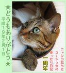 kyaocyabo070131-a.jpg