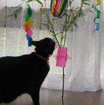 tanabata070705-c.jpg