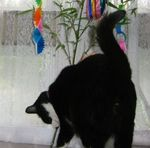tanabata070705-d.jpg